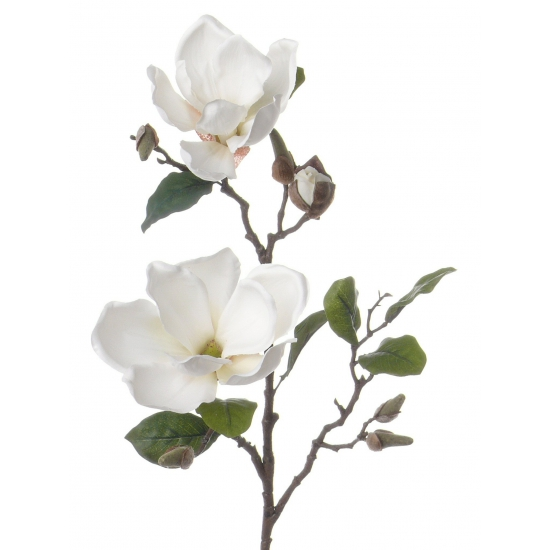 Magnolia sier tak 72 cm