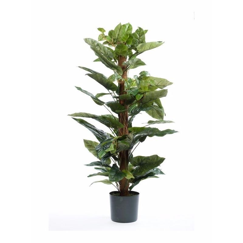 Philodendron plant 120 cm