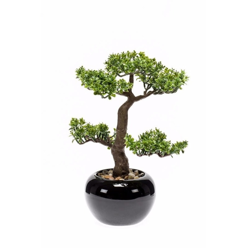 Pilea Bonsai kamerplanten 34 cm