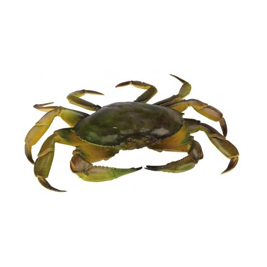 Plastic krab 35 cm