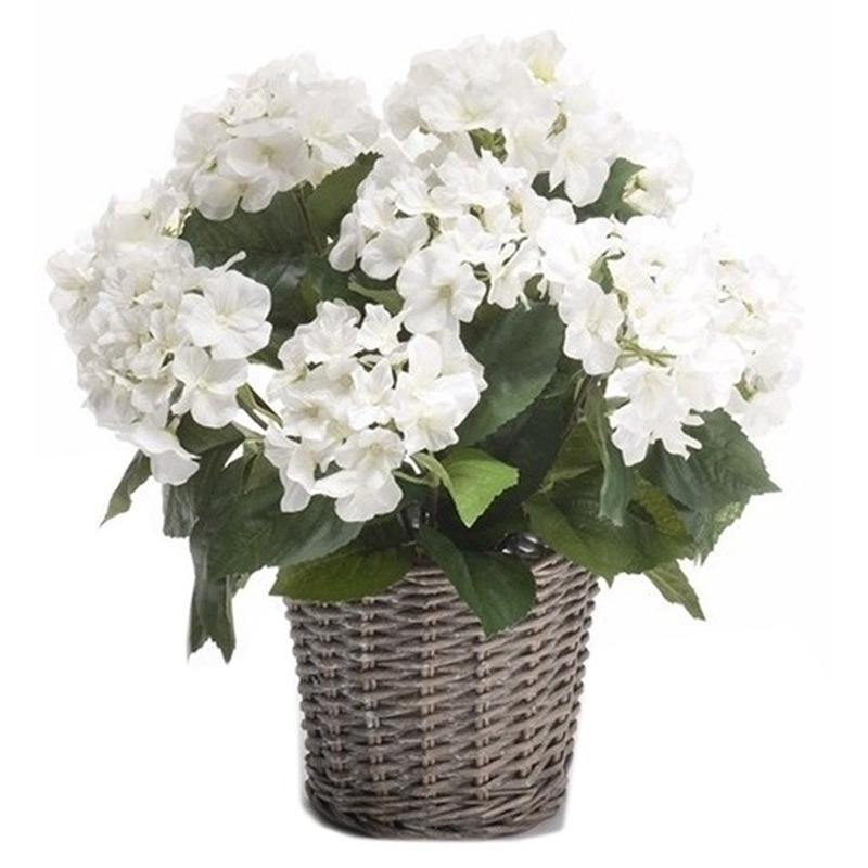 Witte Hortensia plant in mand 45 cm