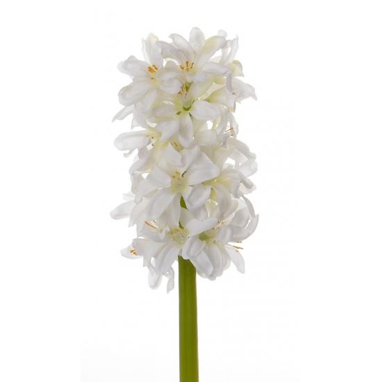 Witte hyacinth 30 cm