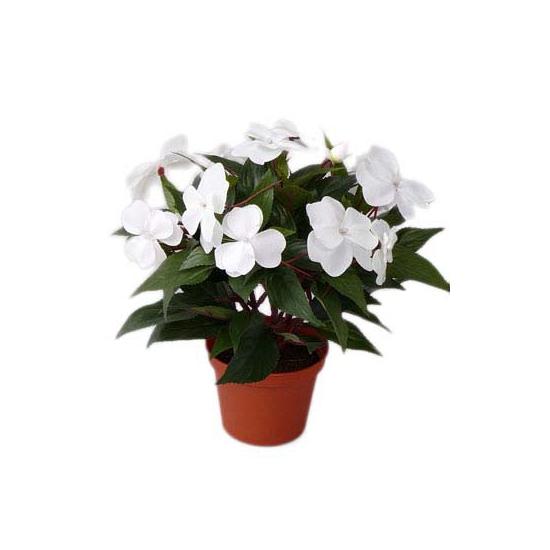 Witte Vlijtig Liesje heester kunstplant 25 cm