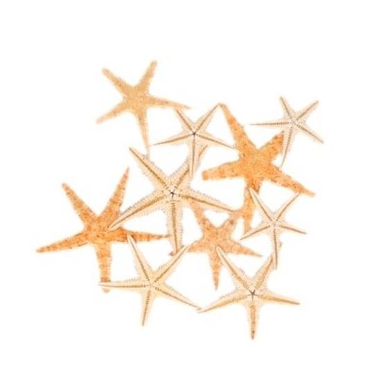 10x zeesterren decoratie