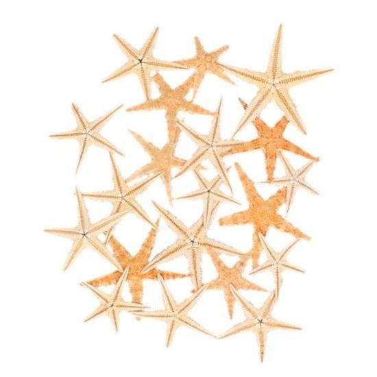 20x zeesterren decoratie