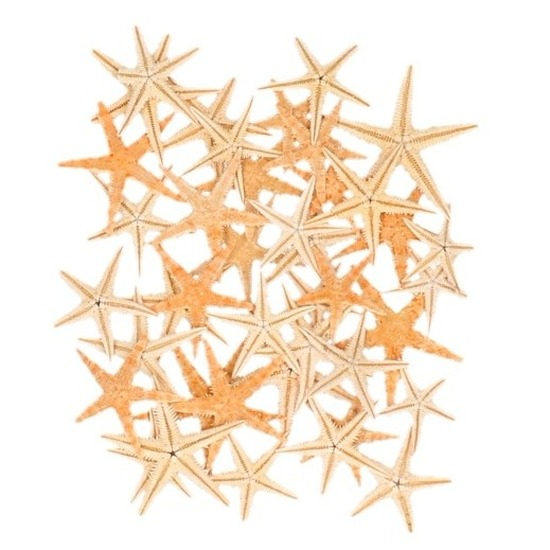 50x zeesterren decoratie