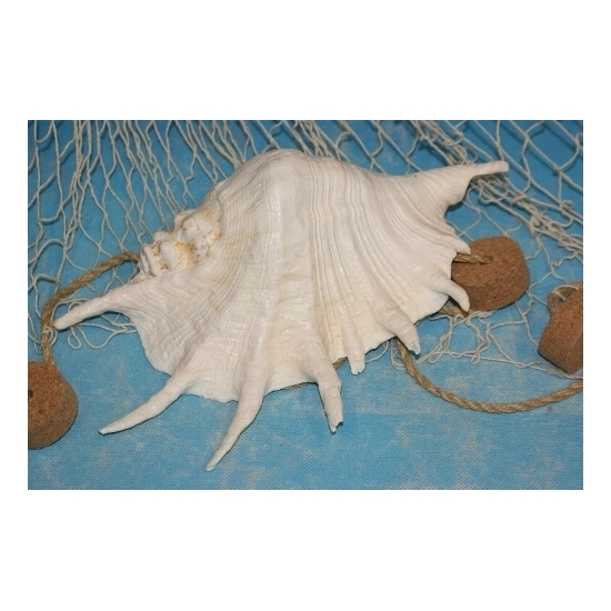 Witte decoratie schelpen 22 cm